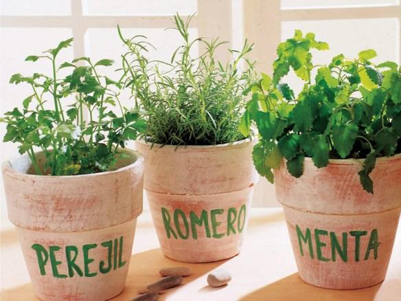 decoraçao vasos de plantas