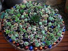 capsulas-de-nespresso-jardim plantas