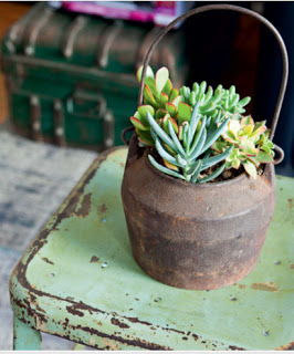 panela cachepo vaso suculenta