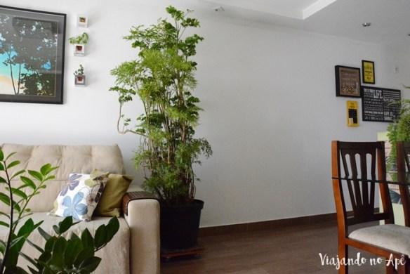 arvore-da-felicidade-polyscias-plantas-dentro-de-casa-ambiente-fechado-plantas-na-decoracao