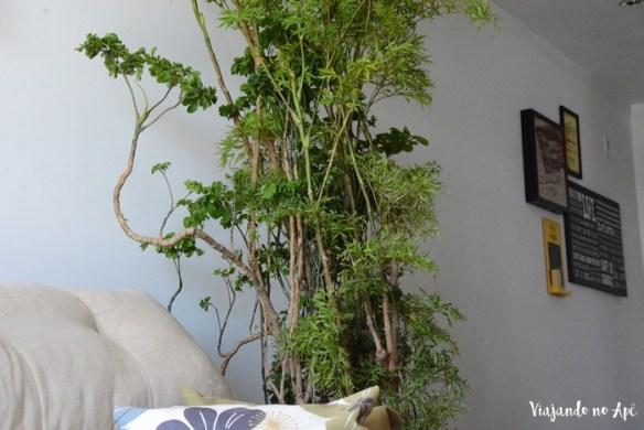 arvore-da-felicidade-polyscias-plantas-dentro-de-casa-ambiente-interno-plantas-na-decoracao-2
