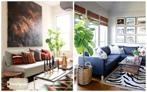 ficus-lyrata-figueira-lira-plantas-dentro-de-casa-ambientes-fechados-internos-decoracao-6