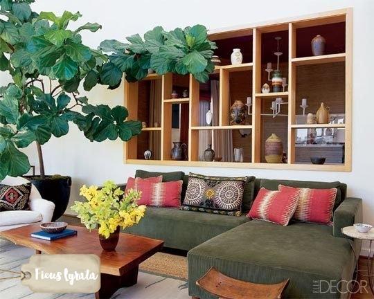 ficus-lyrata-figueira-lira-plantas-dentro-de-casa-ambientes-fechados-internos-decoracao-sala-2