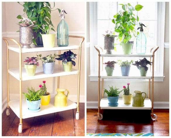 plantas em casa decoracao carrinho bar usos