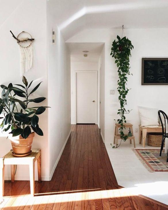 jiboia na decoracao plantas para ambientes internos jiboia plantas suspensas pendentes