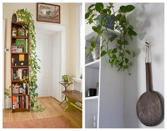 plantas ambientes fechados decoracao jiboia plantas pendentes