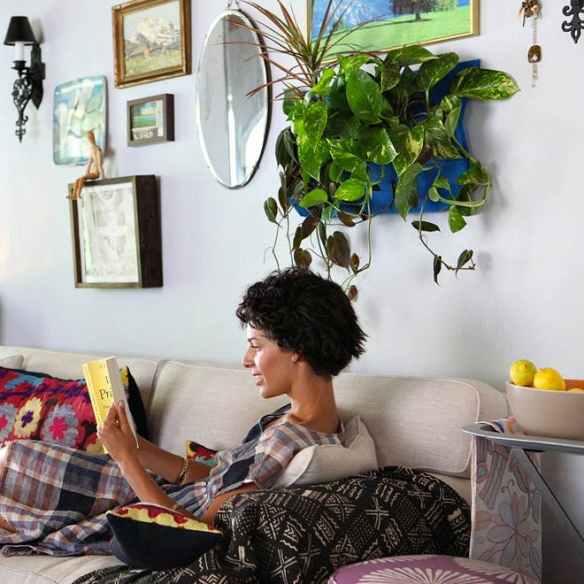 plantas na decoracao plantas para ambientes internos jiboia plantas na parede suspensas pendentes sala