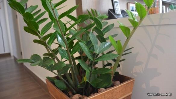 zamioculca planta para ambiente fechado