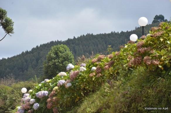 hortensias monte verde