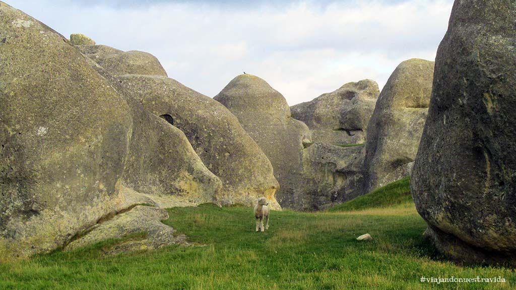elephant rocks nueva zelanda