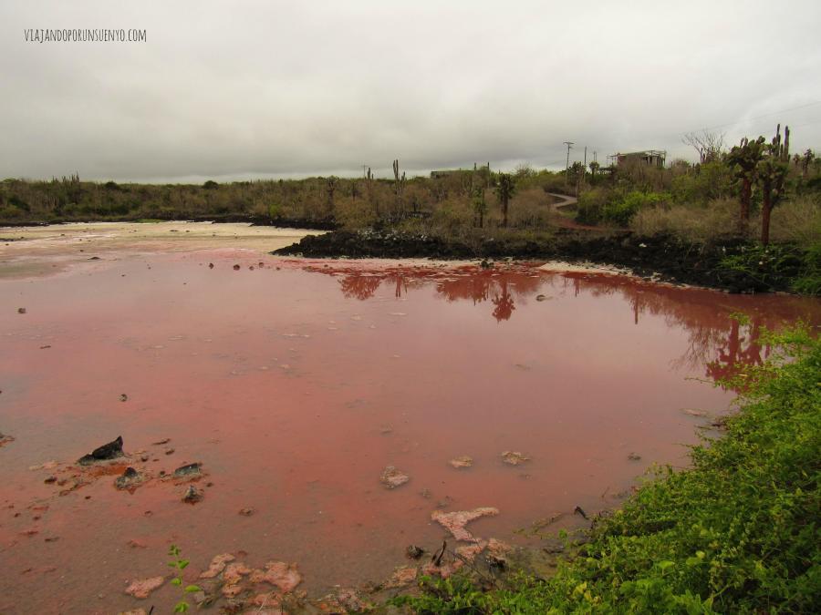 Laguna Santa Cruz galápagos viajandoporunsuenyo