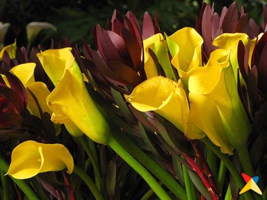Orquideas, Pajaros y Flores