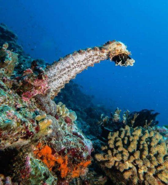 fotografia submarina, practica la foto con los equinodermos.
