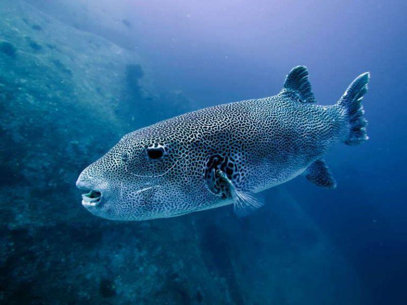 Foto acuática, azulada.