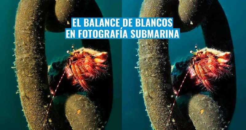balance-de-blancos-fotografia-submarina-