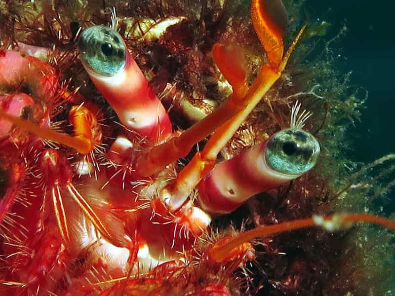 los colores ermitaño rojo composicion fotografia submarina