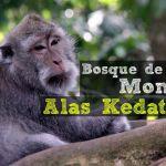 Bosque de los Monos: Alas Kedaton