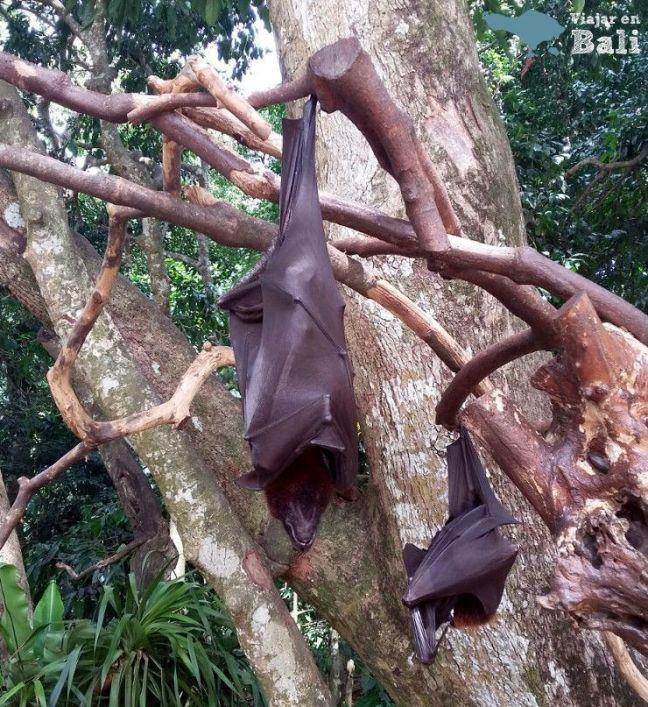 bosque-monos-alas-kedaton-5