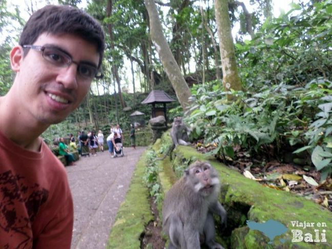 fotos monos de ubud