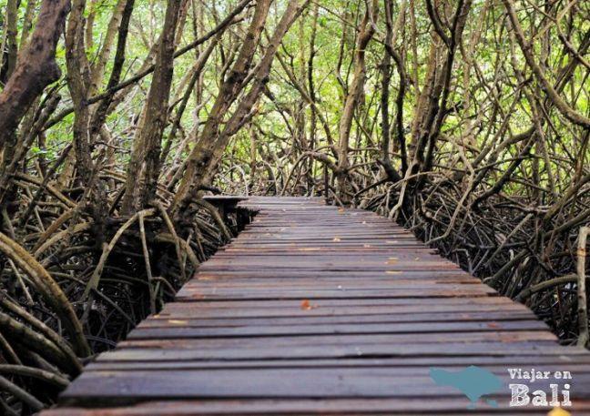 trekking-mangrove-bali-1