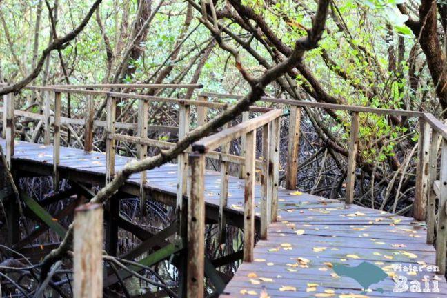 trekking-mangrove-bali-3