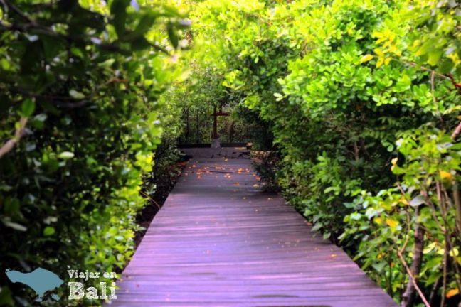 trekking-mangrove-bali-4