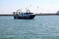 pesca-rapita-lllegada-barcos