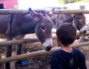 Granja de animales en el Vilar Rural de Cardona