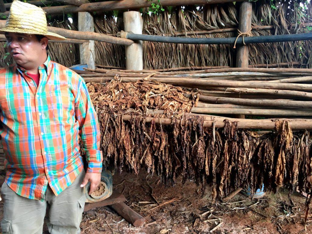 Secaderos de tabaco en Viñales