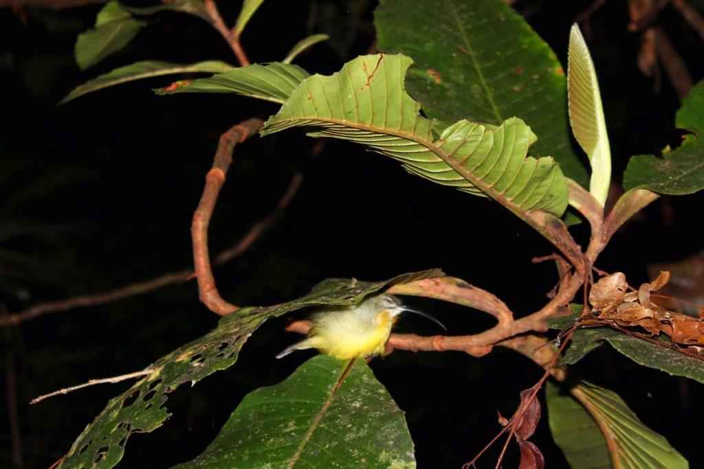 Pequeño pájaro durmiendo que vimos durante el trekking nocturno