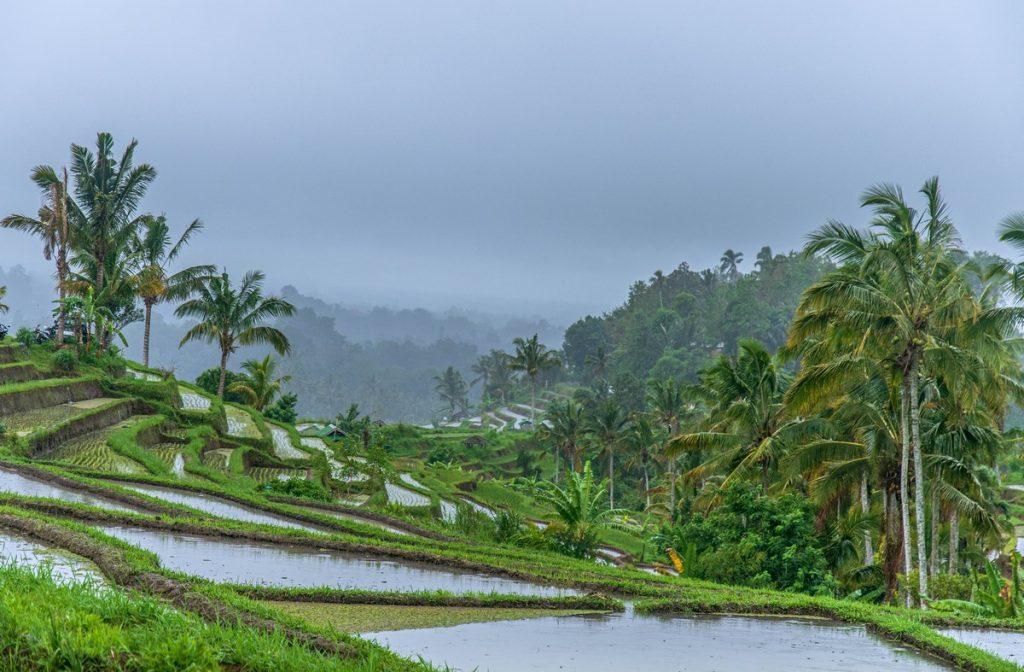 Viaje a Bali por zonas: Los arrozales de Jatiluwih