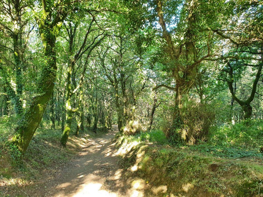 Los bosques del Camino de Santiago