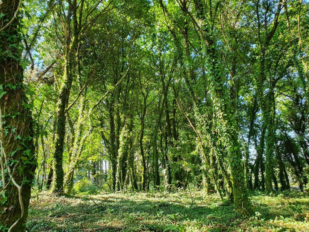 Los preciosos bosques verdes en el Camino de Santiago