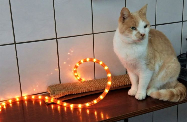 Gato del Poezenboot