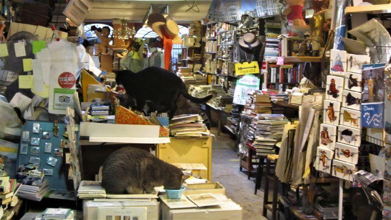 Gatos en la librería Acqua Alta