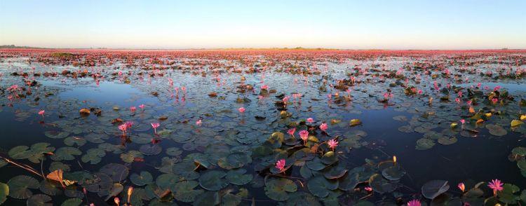 Panoramica Lago lotos Rojos