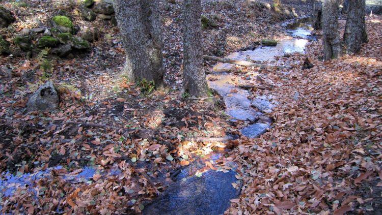 Río en el Castañar del Tiemblo