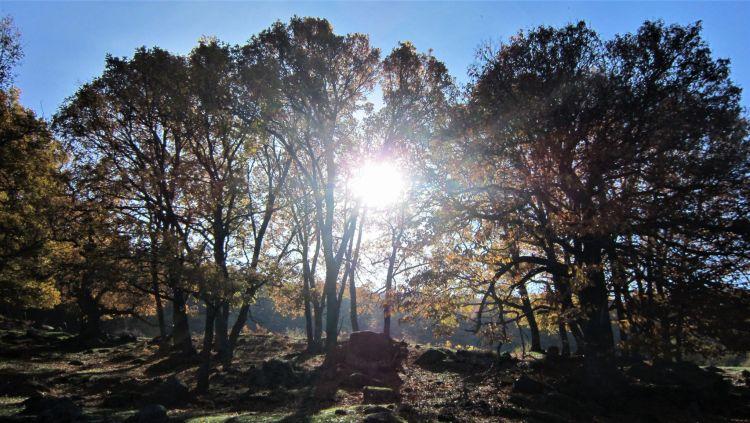 Sol entre los árboles