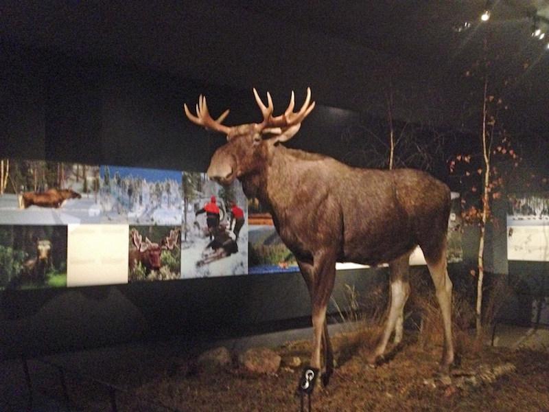 Museos Finlandia Gratis Rovaniemi