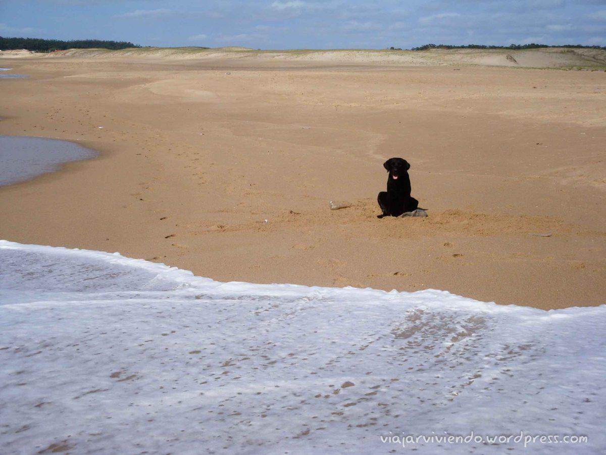 perro en la playa de La Pedrera