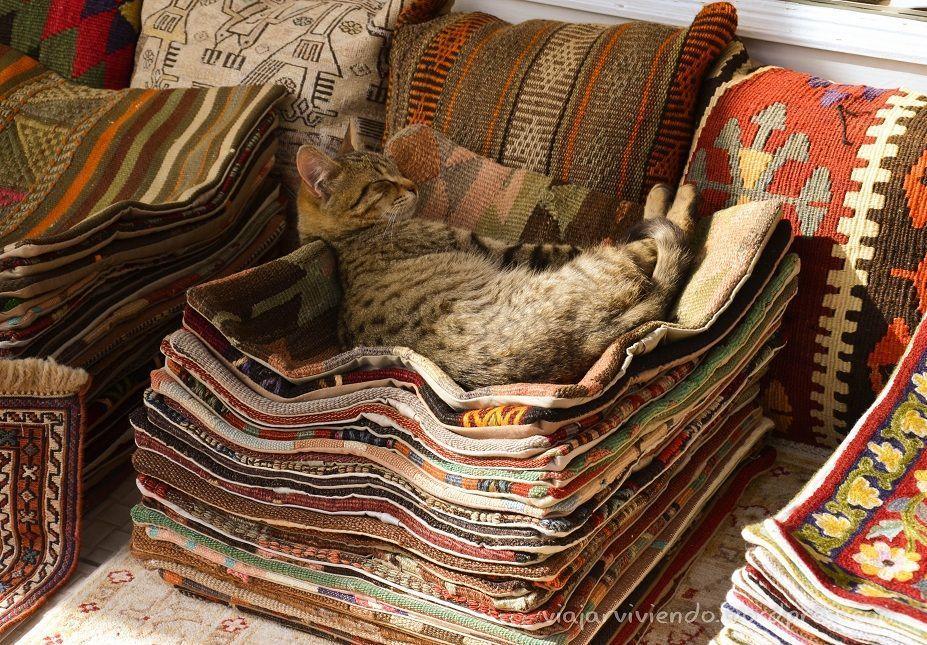 gato en estambul