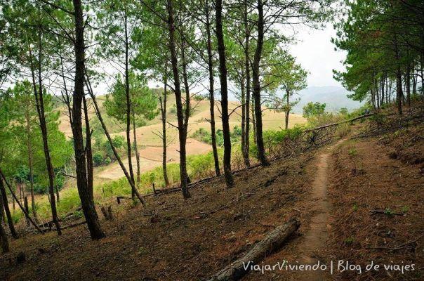 sendero en bosque de Kalaw