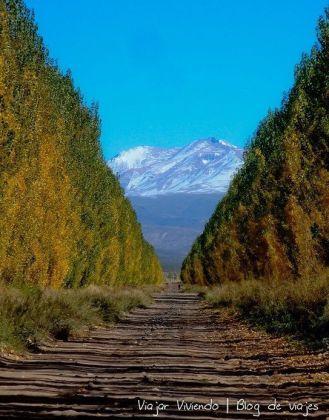 Mendoza y alamos