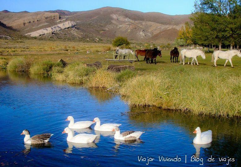 15- patos y caballos en pincheira