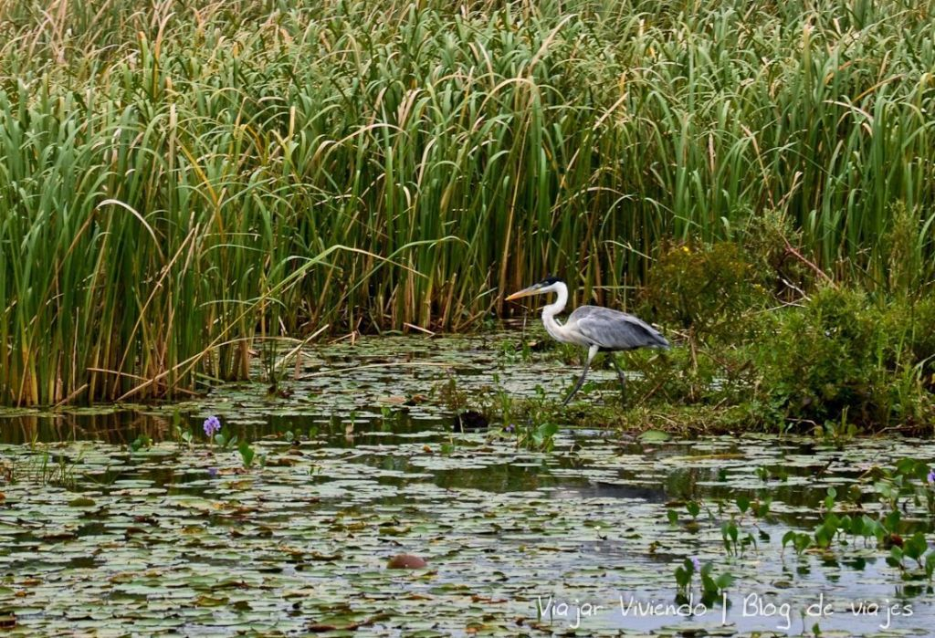 ave en los Esteros del Iberá