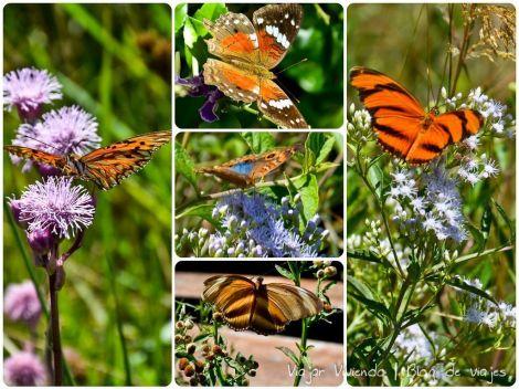 mariposas ibera