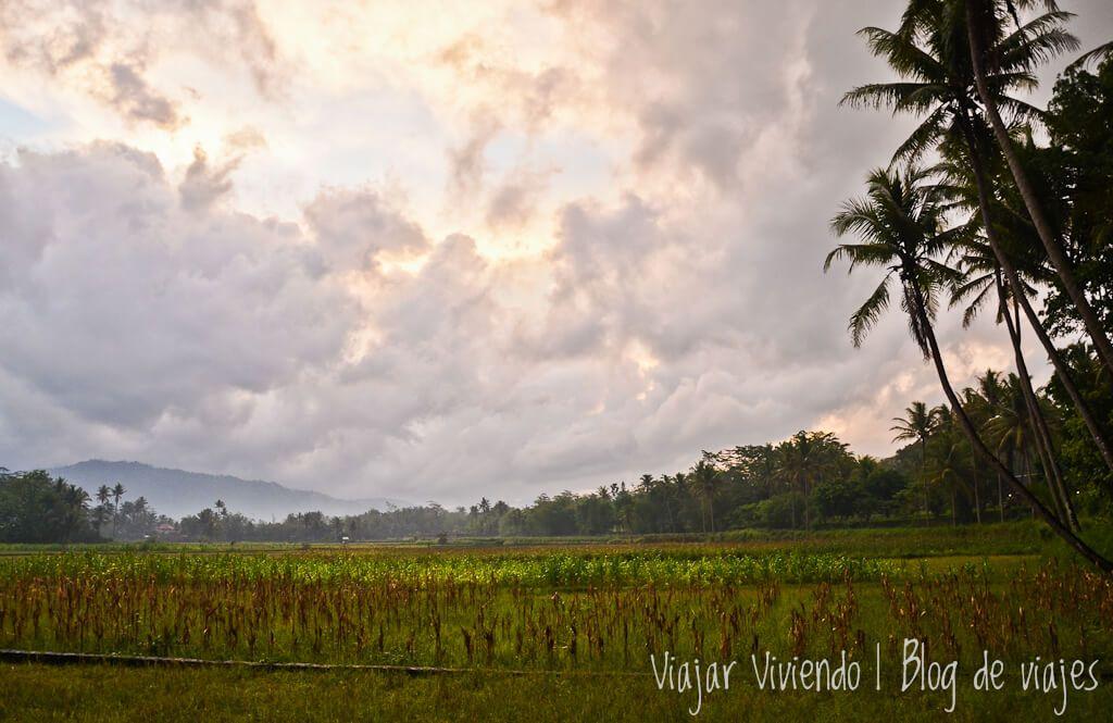 arrozales en Java - que ver en Indonesia