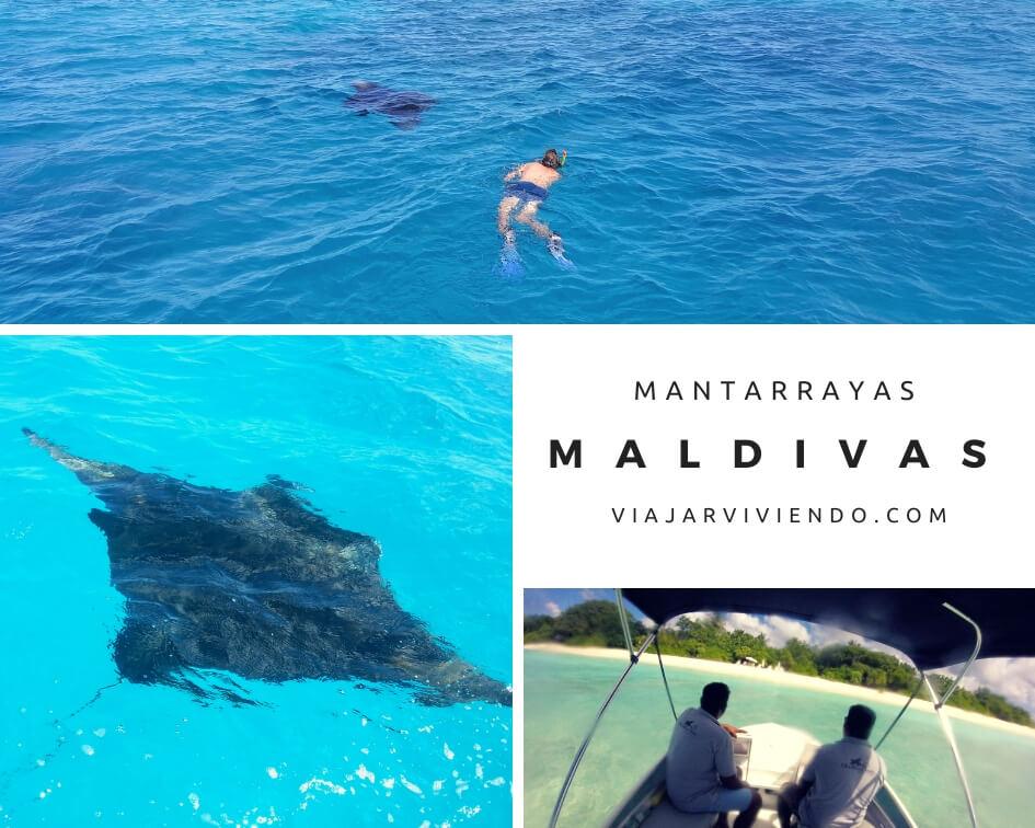 snorkel mantarrayas maldivas