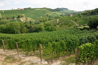 paisaje-vitivinicola-del-piamonte-langhe-roero-y-monferrato
