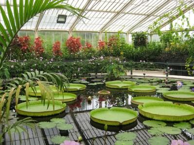 Flores dentro de un invernadero de Kew Gardens